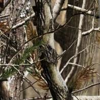 Tree Camouflage Necktie