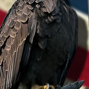 Eagle on US Flag Necktie